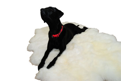 Coloured Sheepskin Rugs Now In Stock!
